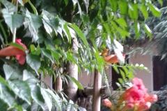 fiori arancioni 2